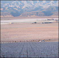 CORE Wines - Santa Barbara County
