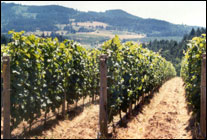 Scott Paul-Pure Oregon Pinot Noir