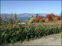Nichol Vineyard and Estate Winery